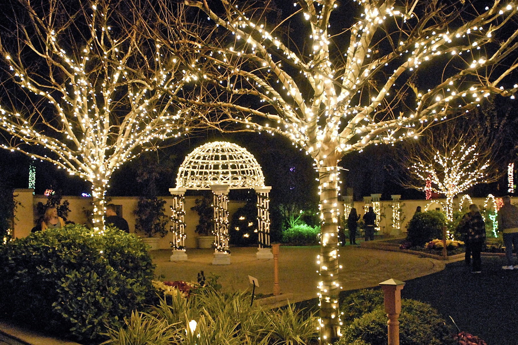 Paradise News Magazine Holiday Lights In The GardenChristmas Lights Garden  #3