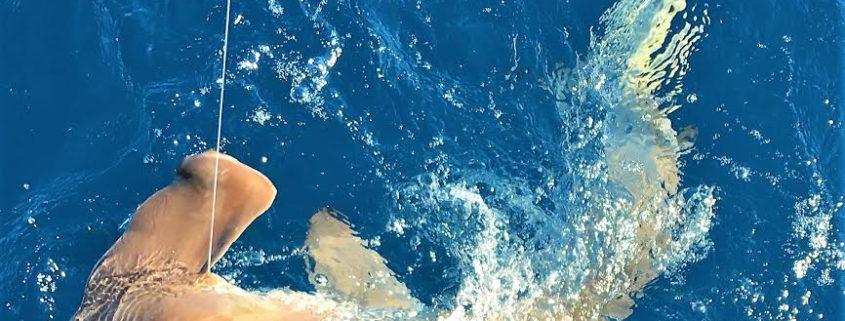 Paradise News Magazine | Hubbard's Marina Fishing Report